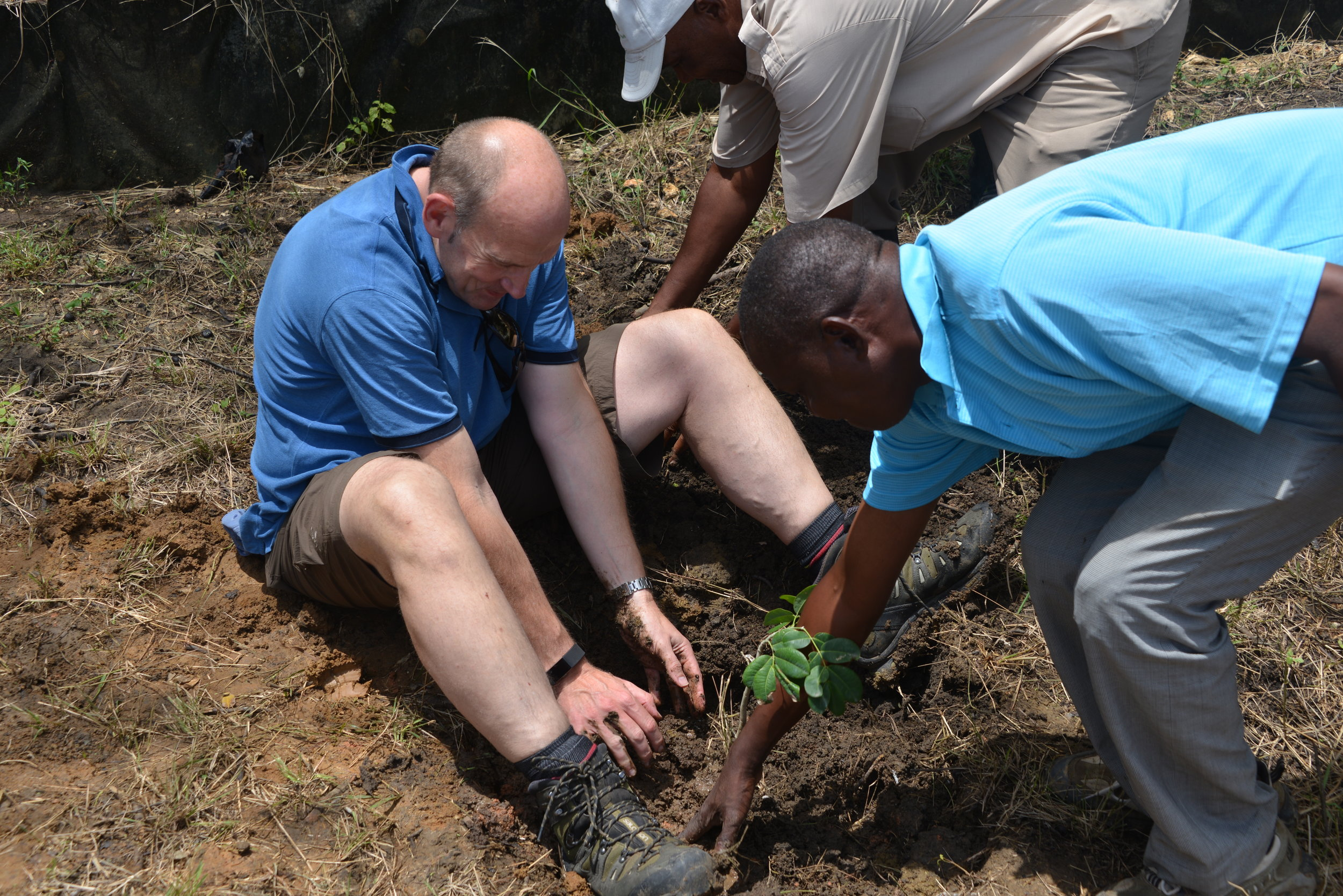 Three men digging/planting with their hands in the soil