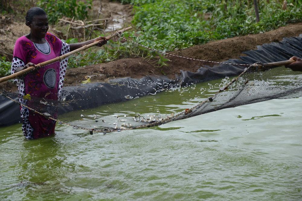 Fishing in Kenya